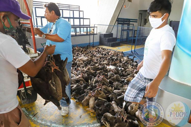 Duck (Itik) Distribution